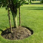 mulching tree and lawn services