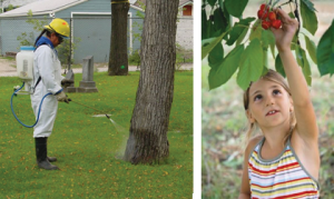Long Island Organic Tree and lawn care