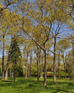 tree service tall trees