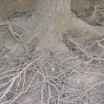 tree service air spade