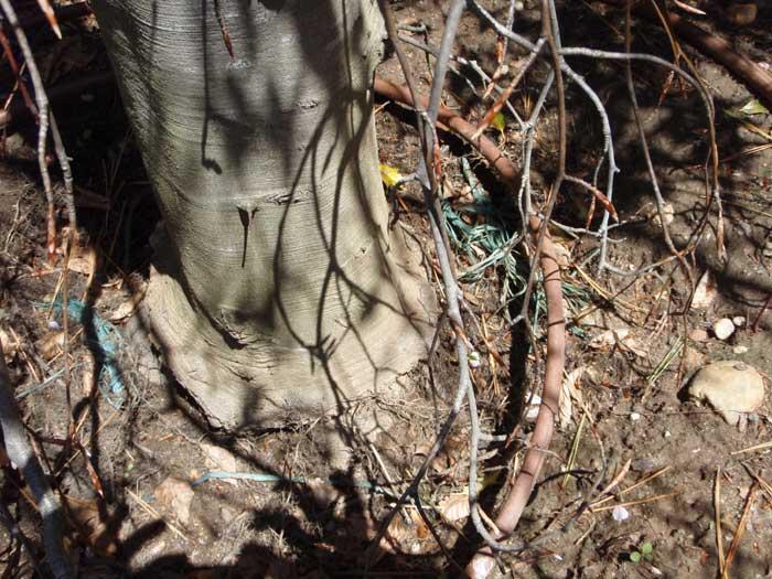 tree basket problems