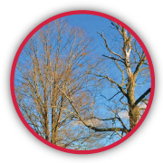 Professional Tree Care & Lawn Care | Best Tree Specialist and Services