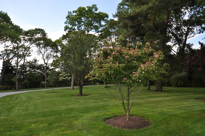 Long Island Property Gallery sterling tree