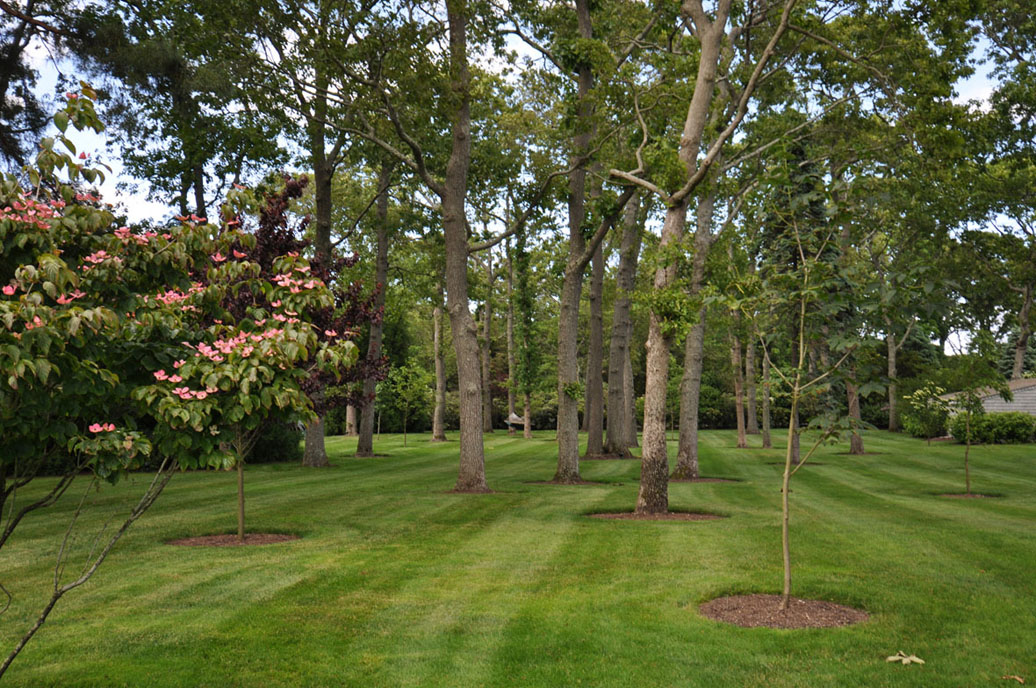 Tree Services Long Island