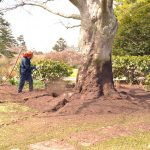 Soil Remediation