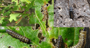 Insect Management Feature